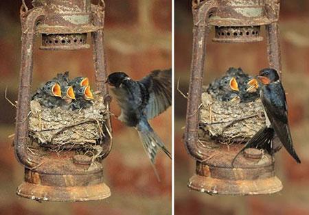 مهر مادر و فرزندی در میان پرنده ها
