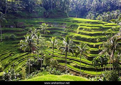 تور لحظه آخری بالی,تور نوروز بالی,هتل های بالی