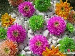 تاثیر هدیه گل ها در انسان