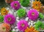 تاثیر هدیه انواع گل  در انسان