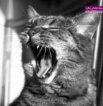 سوالاتی درباره گربه خانگی و پاسخ دامپزشک