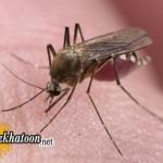 حشرات و انتقال بیماری ایدز !