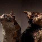 ۱۲ باور اشتباه درباره حیوانات + تصاویر