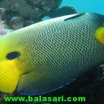 پولک ماهی منبع جدید تولید برق