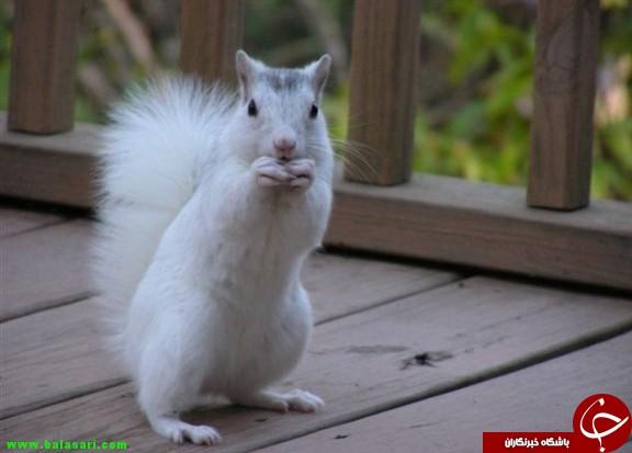 حیوانات آلبینو را میشناسید؟+تصاویر