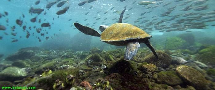 جزیره ی ایزابلا در اِکوادُر