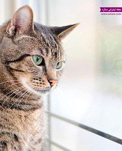 سلامت گربه - گربه و دامپزشک