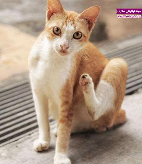 خارش بدن گربه - حرکات گربه خانگی