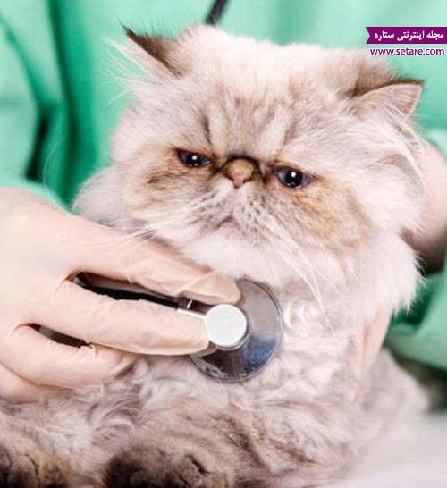 معاینه گربه خانگی توسط دامپزشک