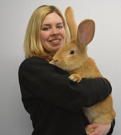 عکس خرگوش غول پیکر